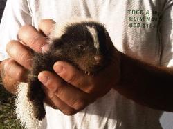 Garden State Wildlife Control New Jersey Animal Control